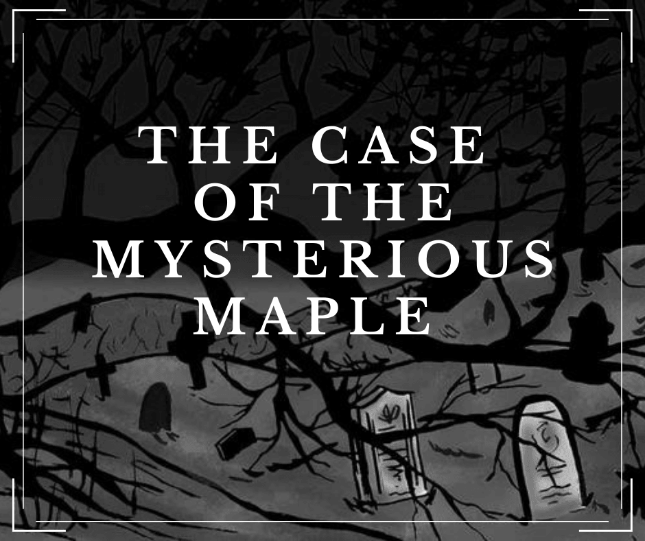 case of the mysterious maple orono puzzle game